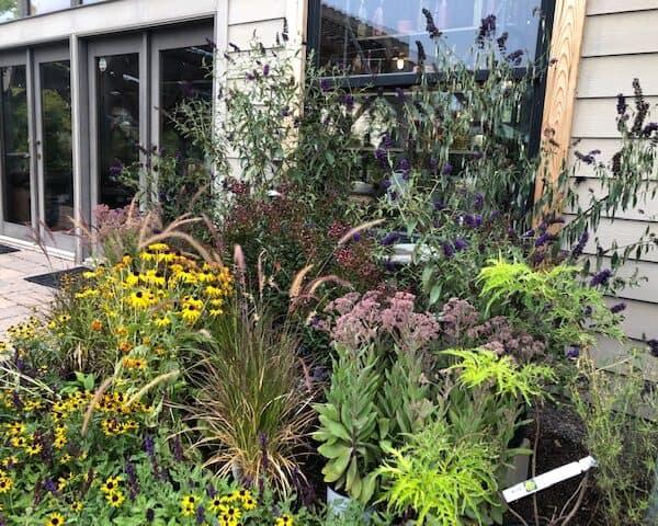 Late Season Perennial Planting