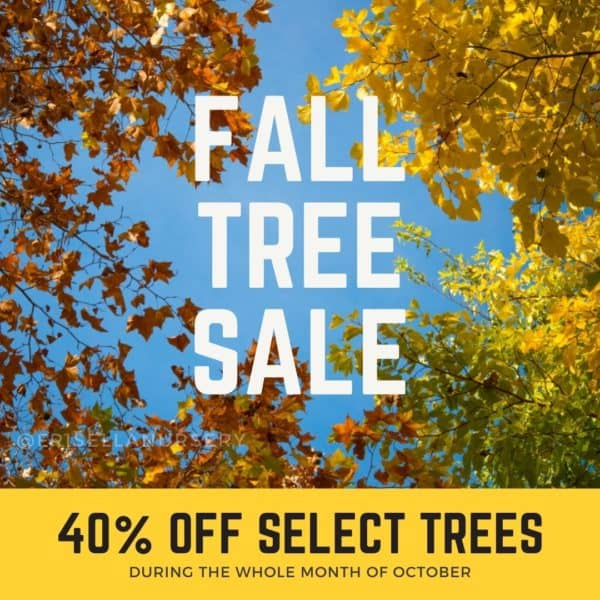 Fall Tree Sale!